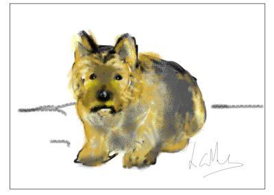 AN IPAD SKETCH OF A PET
